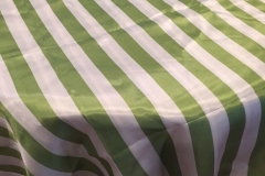 Avocado Green Stripe