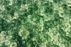 Green-Rosette
